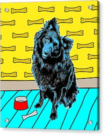 Acrylic Print featuring the photograph Blue Dog by Lou Novick