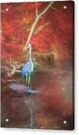 Blue Heron Red Background Acrylic Print