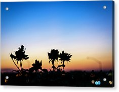 Blue Hour Sunset With Flowers Acrylic Print