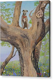 Blue Lacey In A Tree Acrylic Print