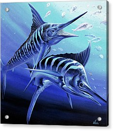Blue Marlins Acrylic Print
