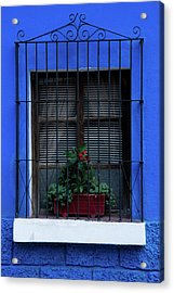Blue-ming Beauty Acrylic Print
