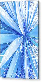 Blue Rays Acrylic Print