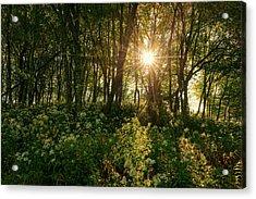 Blue Ridge Parkway - Last Of Summers Light, North Carolina Acrylic Print