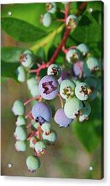 Blueberries Acrylic Print by ©howd, Howard Lau