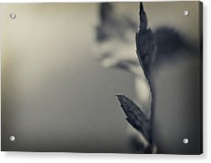Blurred Lines Acrylic Print