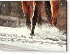 Blustery Trot Acrylic Print by JAMART Photography
