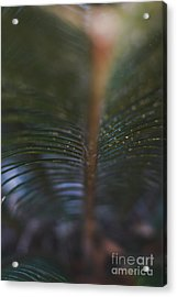 Bokeh Sparkles - Macro Acrylic Print