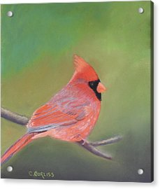 Bonded Pair - Male Cardinal Acrylic Print