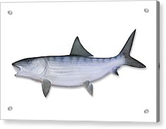Bonefish With Clipping Path Acrylic Print by Georgepeters