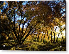Bosque Color Acrylic Print