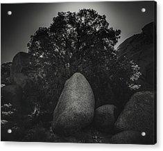 Boulder With Tree Acrylic Print by Joseph Smith