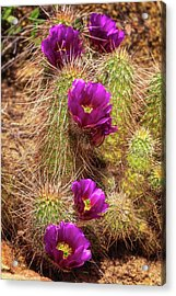 Acrylic Print featuring the photograph Bouquet Of Beauty by Rick Furmanek