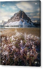Acrylic Print featuring the photograph Bow Lake / Alberta, Canada  by Nicholas Parker