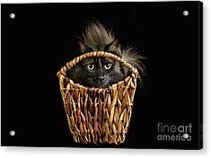 Boyfriend In A Basket Acrylic Print