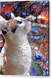 Brady The Half Siamese Half Tabby Cat Acrylic Print