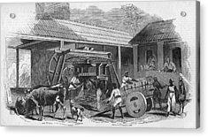 Brazilian Sugar Mill Acrylic Print by Hulton Archive