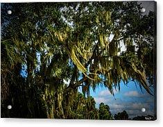 Breezy Florida Day Acrylic Print
