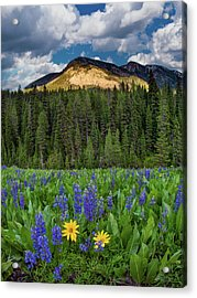 Bridger Teton National Forest Acrylic Print by Leland D Howard