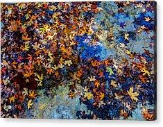 Bright Beautiful Fall Foliage Floating Acrylic Print by Richard A Mcmillin