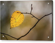Acrylic Print featuring the photograph Bright Fall Leaf 10 by Michael Arend