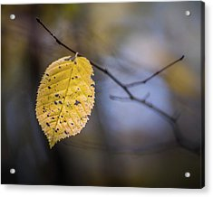 Acrylic Print featuring the photograph Bright Fall Leaf 3 by Michael Arend