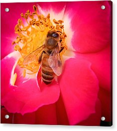 Brilliant Bee Acrylic Print