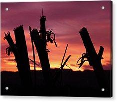 Broken Trees - Sunset Silhouettes Acrylic Print