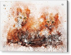 Brothers Cat Acrylic Print
