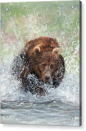 Brown Bear Charging Through Water Acrylic Print