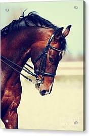 Brown Stallion. Portrait Of A Sports Acrylic Print