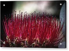 Brush Flower Acrylic Print