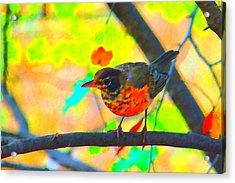Brushed Robin Acrylic Print by Edward Swearingen