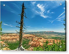 Bryce Canyon Np - Bryce Point Acrylic Print