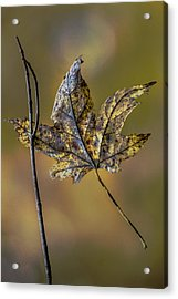 Acrylic Print featuring the photograph Buddies by Michael Arend