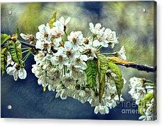 Budding Blossoms Acrylic Print
