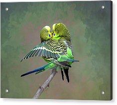 Budgie Love Acrylic Print