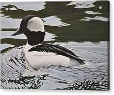 Acrylic Print featuring the painting Bufflehead by Peter Mathios
