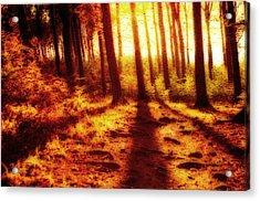 Burning Forest Acrylic Print