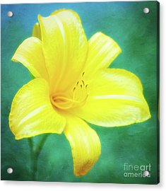 Buttered Popcorn Daylily In Her Glory Acrylic Print