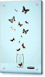 Butterflies Escaping From Jar Acrylic Print by Martin Poole