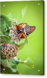 Butterfly Buffet II Acrylic Print