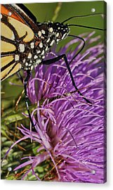 Butterfly Closeup Vertical Acrylic Print