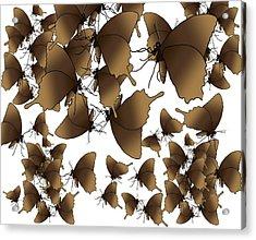 Butterfly Patterns 1 Acrylic Print