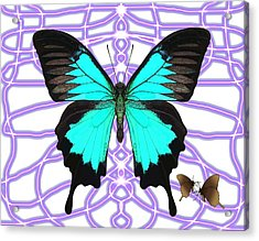 Butterfly Patterns 18 Acrylic Print