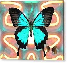 Butterfly Patterns 21 Acrylic Print