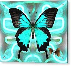 Butterfly Patterns 22 Acrylic Print