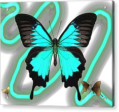 Butterfly Patterns 23 Acrylic Print