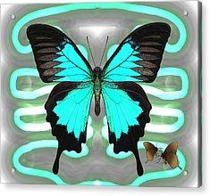 Butterfly Patterns 24 Acrylic Print