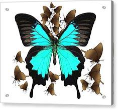 Butterfly Patterns 25 Acrylic Print